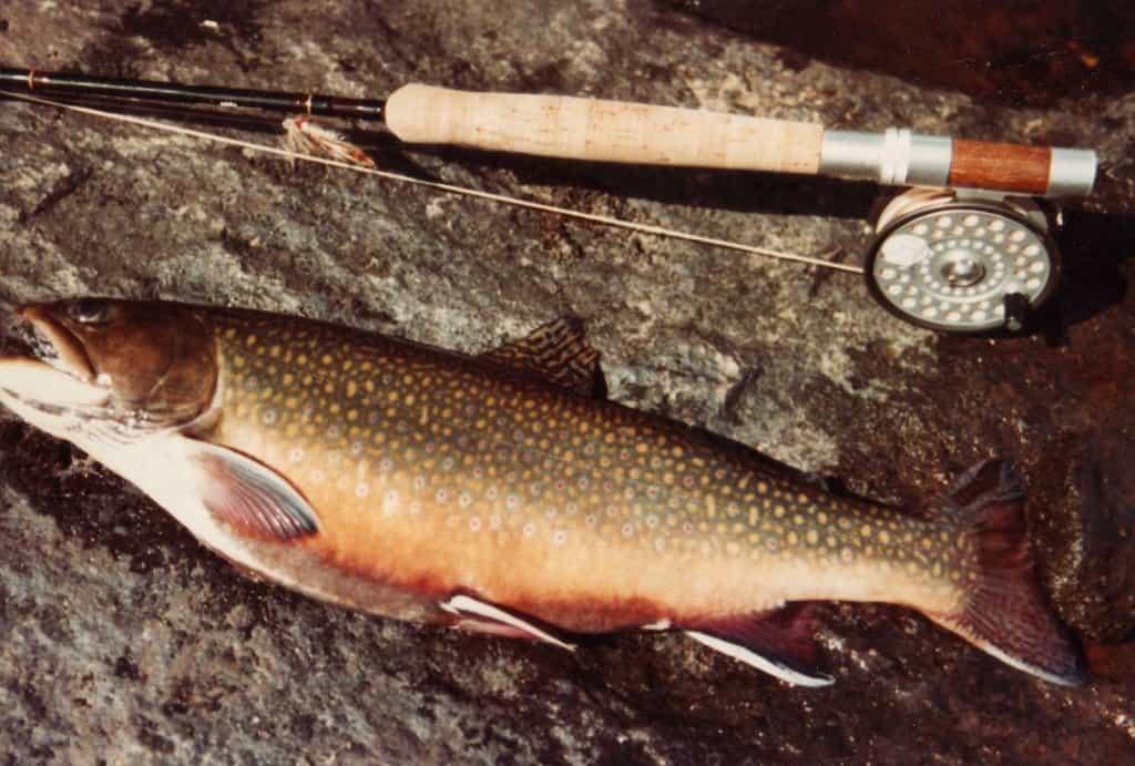 fishing-phillip
