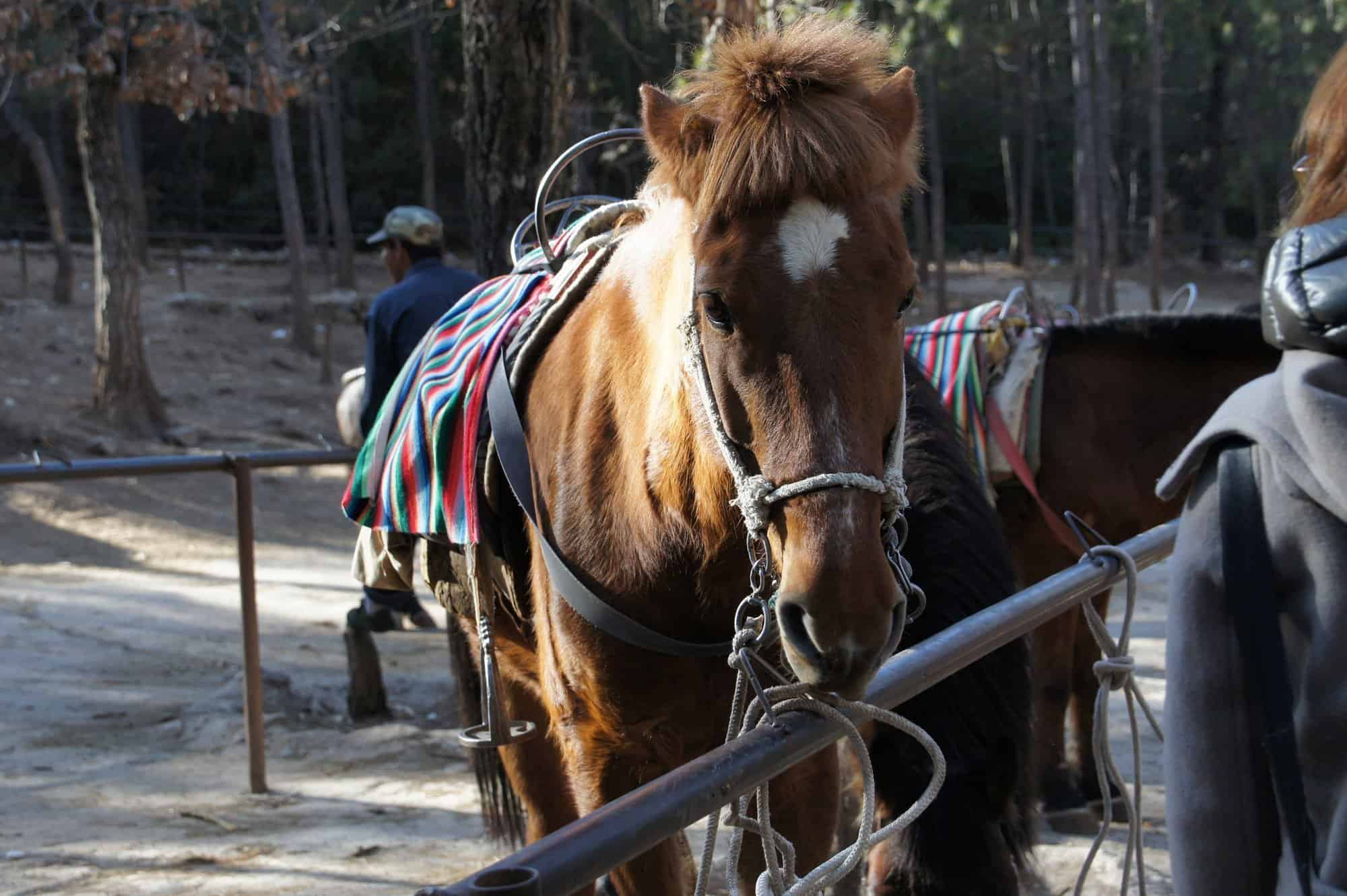 horse-riding-blese